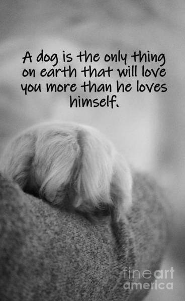 Photograph - A Dog's Love by Patti Whitten