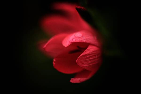 Photograph - A Dollop Of Red  by Connie Handscomb