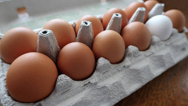 Photograph - A Dozen Good Eggs by Connie Fox