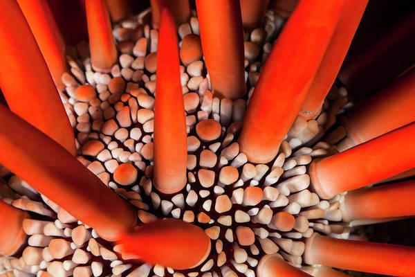 Wall Art - Photograph - A Dramatic Close-up Of A Red Pencil Sea by Jenna Szerlag
