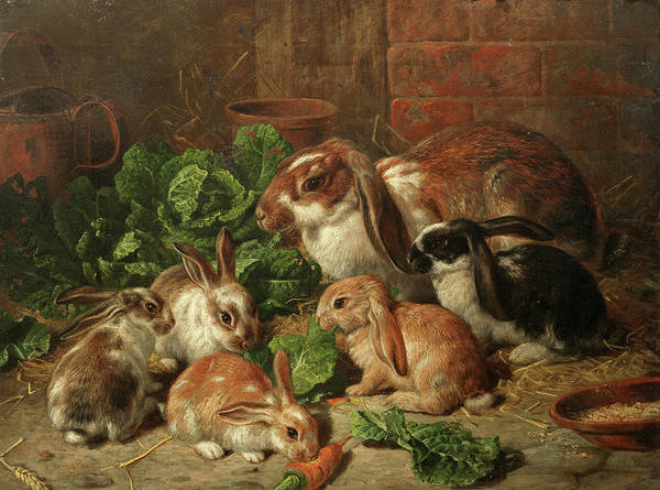 Wall Art - Painting - A Family Of Rabbits by Alfred Richardson Barber
