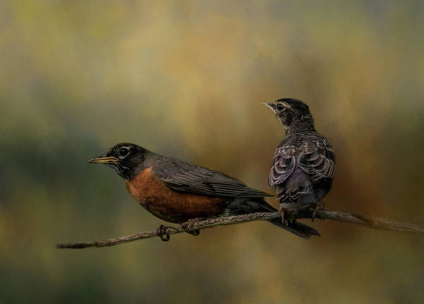 Photograph - A Fathers Watchful Eye by Kelley Parker