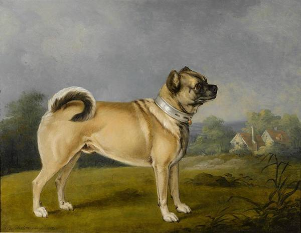 Wall Art - Painting - A Favorite Pug By Henry Bernard Chalon, 1802. by Celestial Images