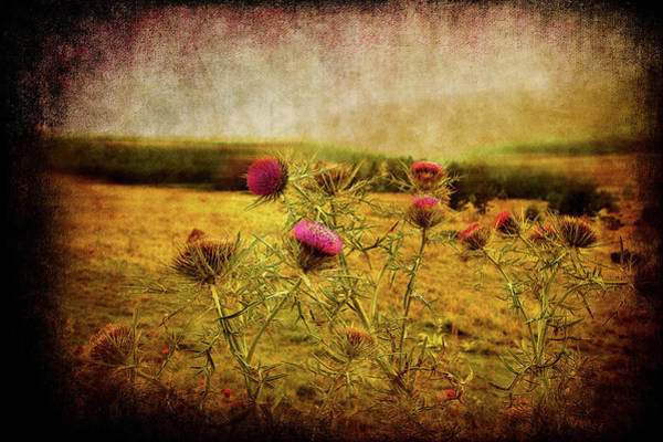 Photograph - A Field Covered With Mist by Milena Ilieva