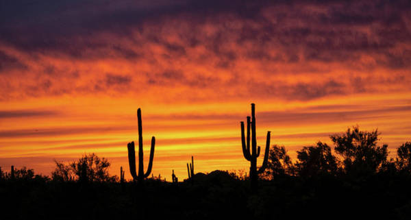 Photograph - A Fiery Saguaro Sunset  by Saija Lehtonen