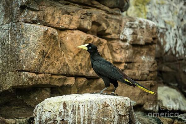 Photograph - A Fine Feathered Friend by Jon Burch Photography