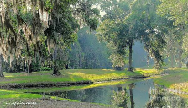 Photograph - A Fine Southern Morning by Tami Quigley