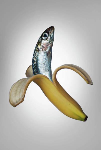 Wall Art - Photograph - A Fish In A Banana by Buena Vista Images
