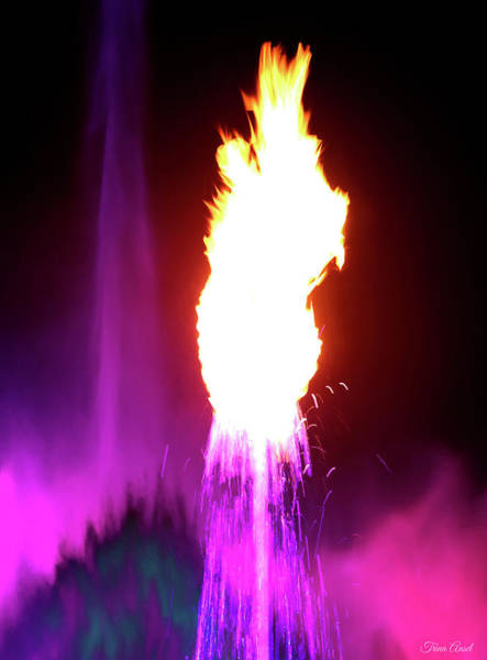 Photograph - A Flaming Fountain In Pink by Trina Ansel