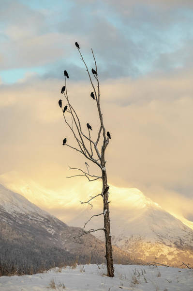 Wall Art - Photograph - A Flock Of Ravens Perched In An Old by Doug Lindstrand