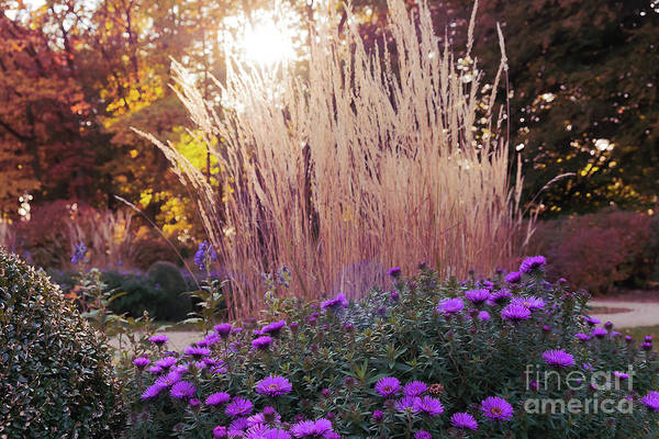 Photograph - A Flower Bed In The Autumn Park by Marina Usmanskaya