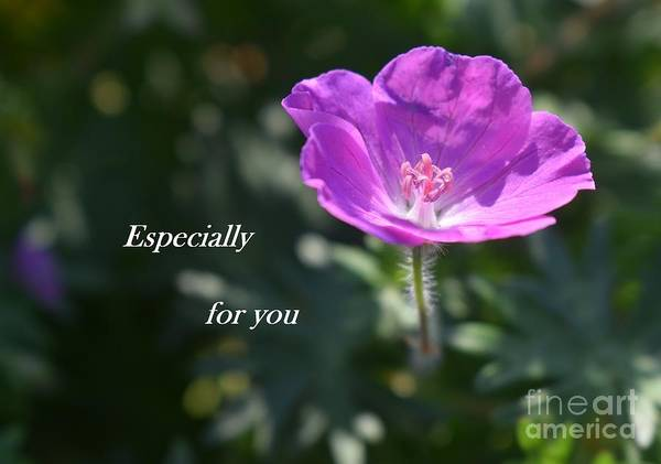 Photograph - A Flower For You by Christina Verdgeline