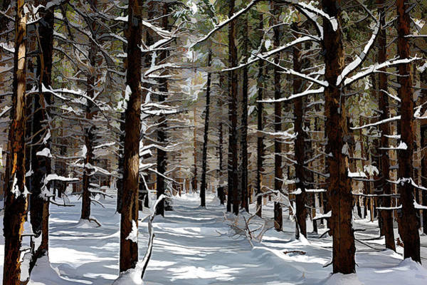 Wall Art - Photograph - A Forest In Winter - Acrylic by Eric Glaser