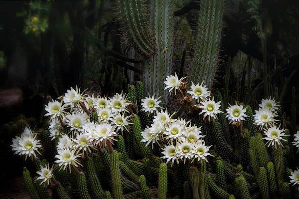 Wall Art - Photograph - A Forest Of Cacti by Saija Lehtonen
