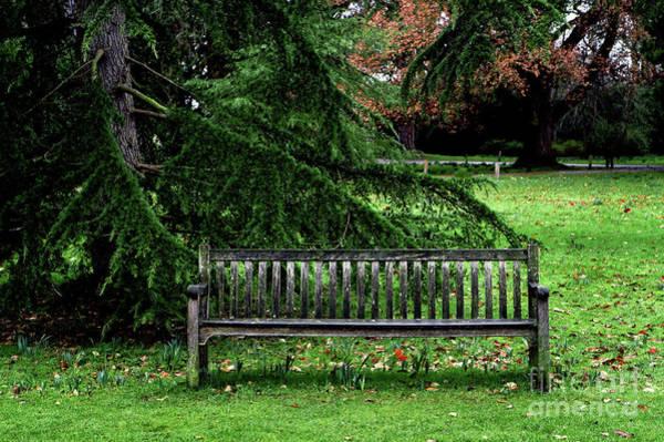 Wall Art - Photograph - A Garden Bench by Tom Gowanlock