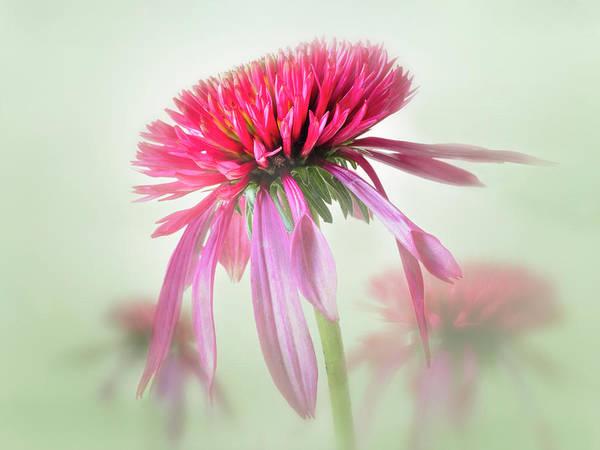 Photograph - A Garden Symhony. by Usha Peddamatham