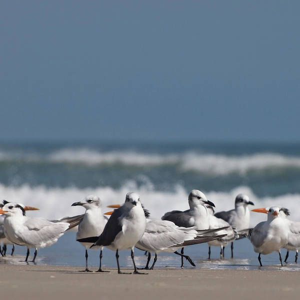 Wall Art - Photograph - A Gathering Of Gulls by Dannie Quinn