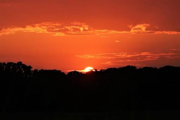 Photograph - A Golden Sunset  by Sheila Brown
