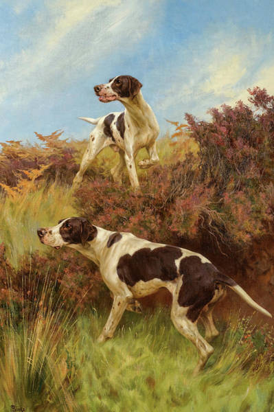 Field Spaniel Painting - A Good Point, 19th Century by Thomas Blinks