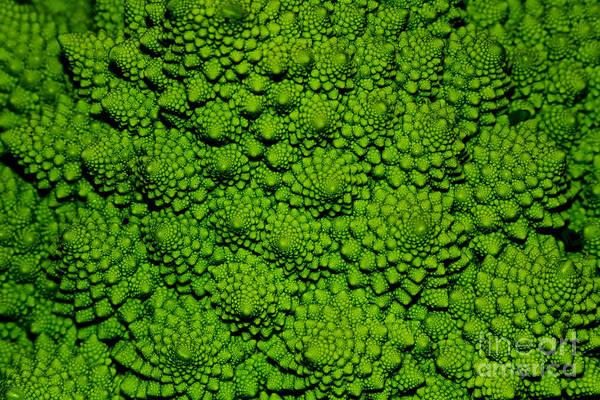 Fractal Wall Art - Photograph - A Green Cabbage Closeup by Ziche77