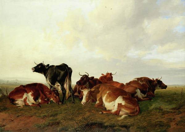 Breeding Painting - A Group Of Six Cows In Canterbury Meadows by Thomas Sidney Cooper