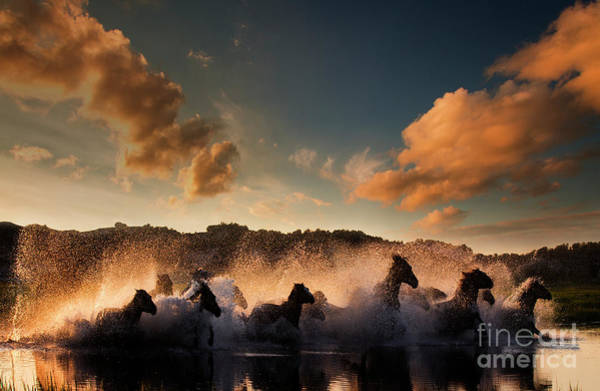 Wall Art - Photograph - A Group Of Wild Horses Galloping by Tony 許