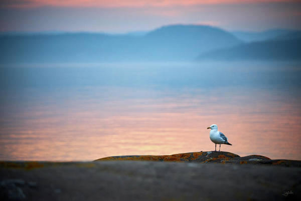 Photograph - A Gulls Life by Doug Gibbons