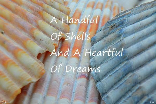 Photograph - A Handful Of Shells And A Heartful Of Dreams by Lisa Wooten