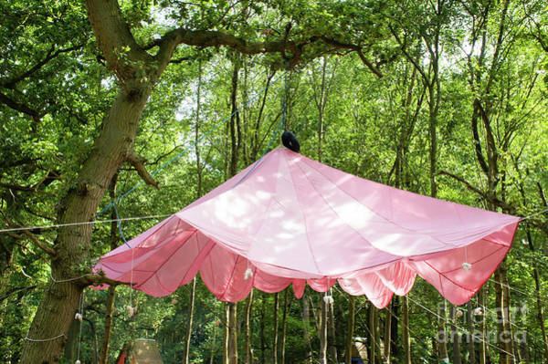 Wall Art - Photograph - A Hanging Canopy by Tom Gowanlock
