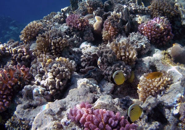 Photograph - A Healthy Coral Reef Looks Like This by Johanna Hurmerinta