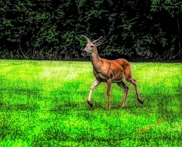 Digital Art - A Healthy Male White Tailed Deer With Summer Horns In Velvet. by Rusty R Smith