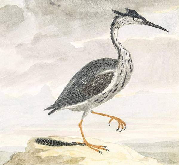Wall Art - Painting - A Heron By Johan Teyler  1648-1709  by Celestial Images