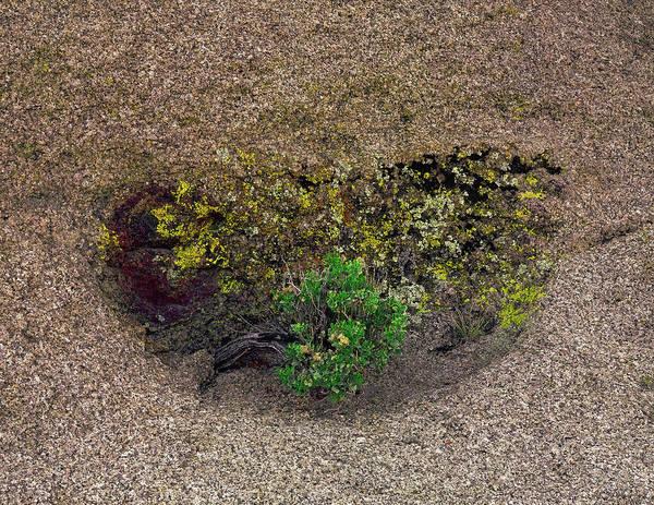 Photograph - A Hidden Wall Flower by Paul Breitkreuz