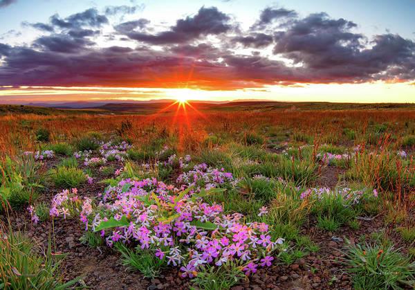 Photograph - A High Desert Spring by Leland D Howard