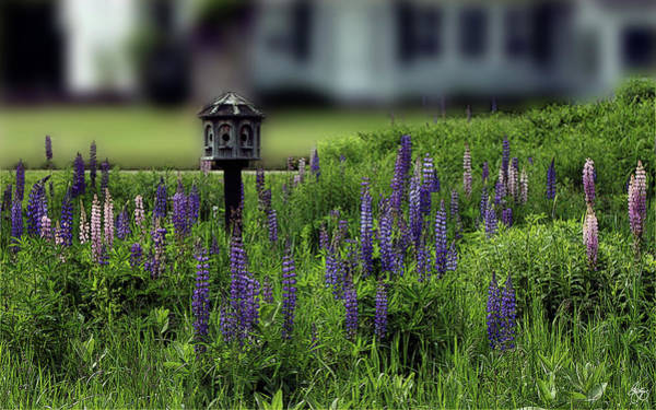 Photograph - A Home Among The Lupine by Wayne King