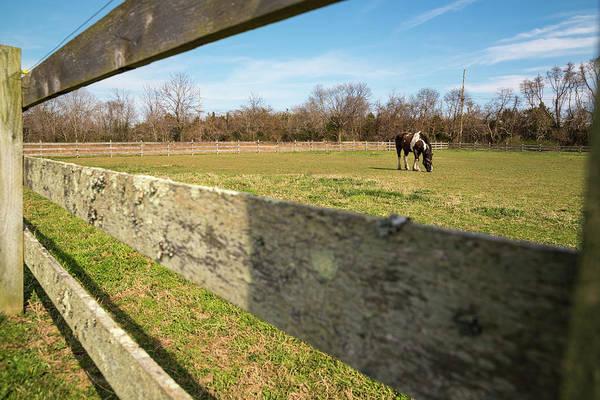 Photograph - A Horse by Kristopher Schoenleber