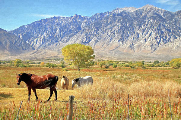 Wall Art - Photograph - A Horse Of A Different Color by Donna Kennedy