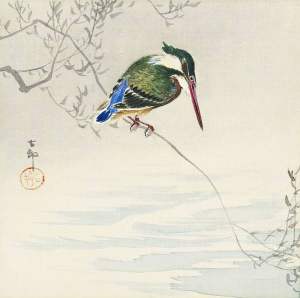 Wall Art - Painting - A Kingfisher  1920  By Ohara Koson  1877-1945  by Celestial Images