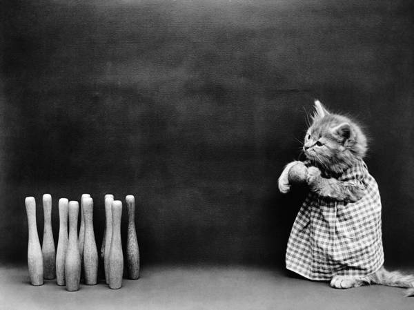Wall Art - Photograph - A Kitten Bowling - Harry Whittier Frees by War Is Hell Store