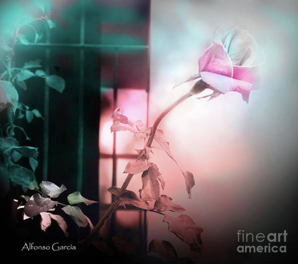 Photograph - A La Ventana by Alfonso Garcia