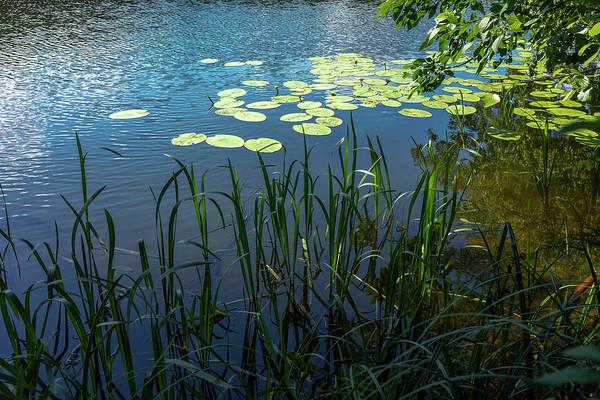 Photograph - A Lake Near Sweita Lipka, Northern Poland by Dubi Roman