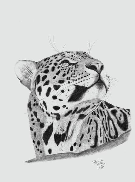 Nocturnal Drawing - A Leopard's Gaze by Patricia Hiltz