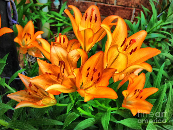 Wall Art - Photograph -  A Lily Delight At Xmas .1 by Lawrence Davis