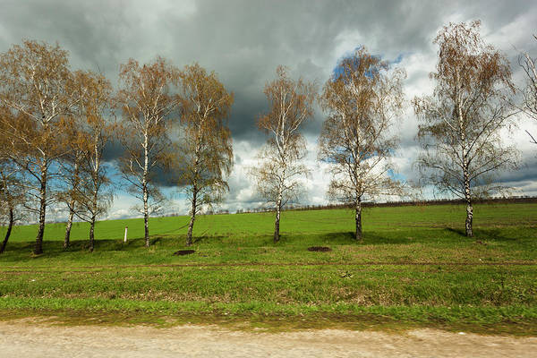 Moldova Wall Art - Photograph - A Line Of Birch Trees by Made By  Vitaliebrega.com