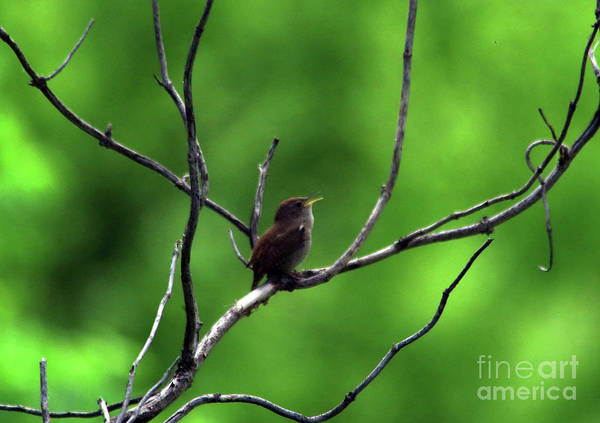Wall Art - Photograph - A Little Bird With A Song by Jeff Swan