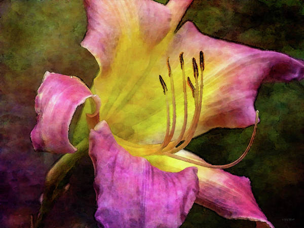 Photograph - A Little Worn 4325 Idp_2 by Steven Ward