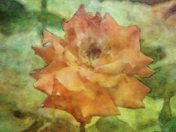 Photograph - A Little Worn 4948 Idp_2 by Steven Ward