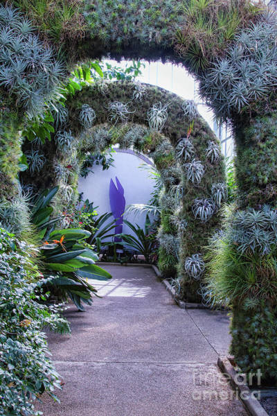 Photograph - A Living Arch by Marilyn Cornwell