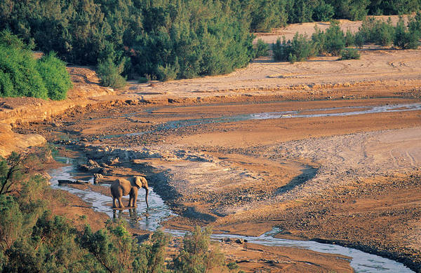 Safari Animal Photograph - A Lone African Desert Elephant Bull by Roger De La Harpe