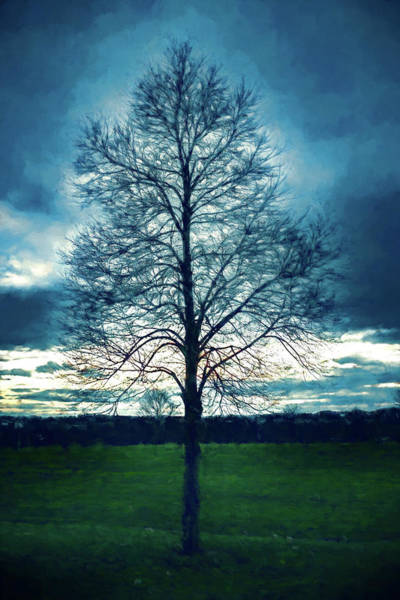 Digital Art - A Lone Tree In Winter by Jason Fink